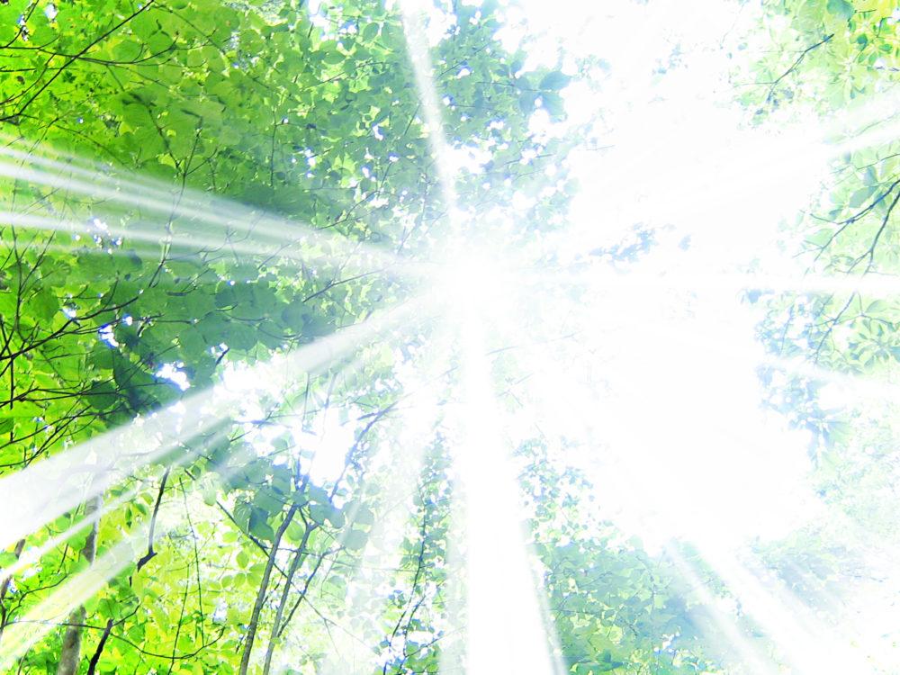 光の差す森林